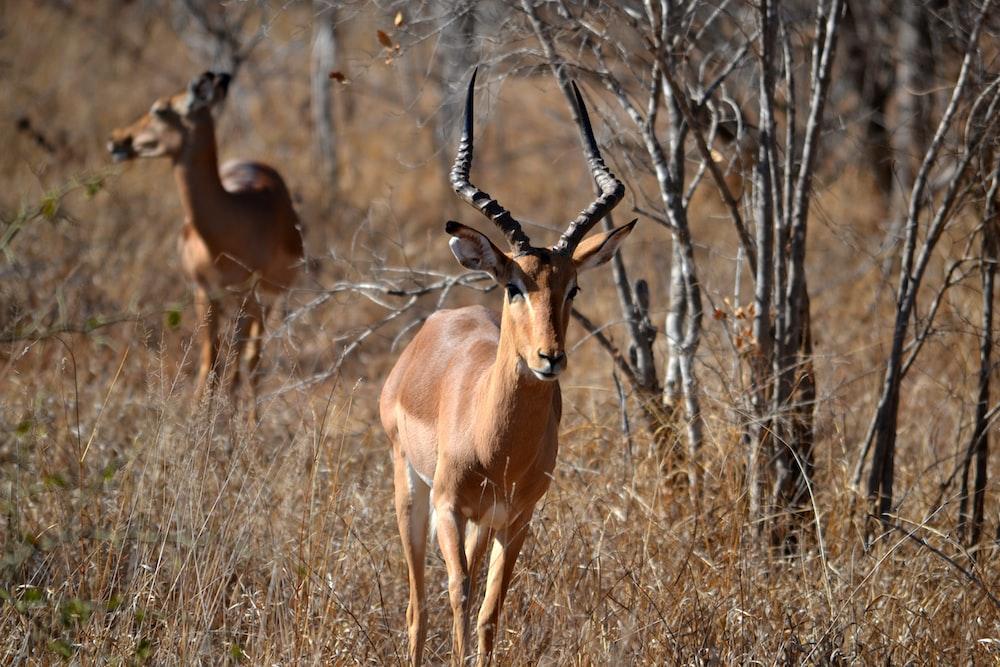 tilt shift photography of brown antelope