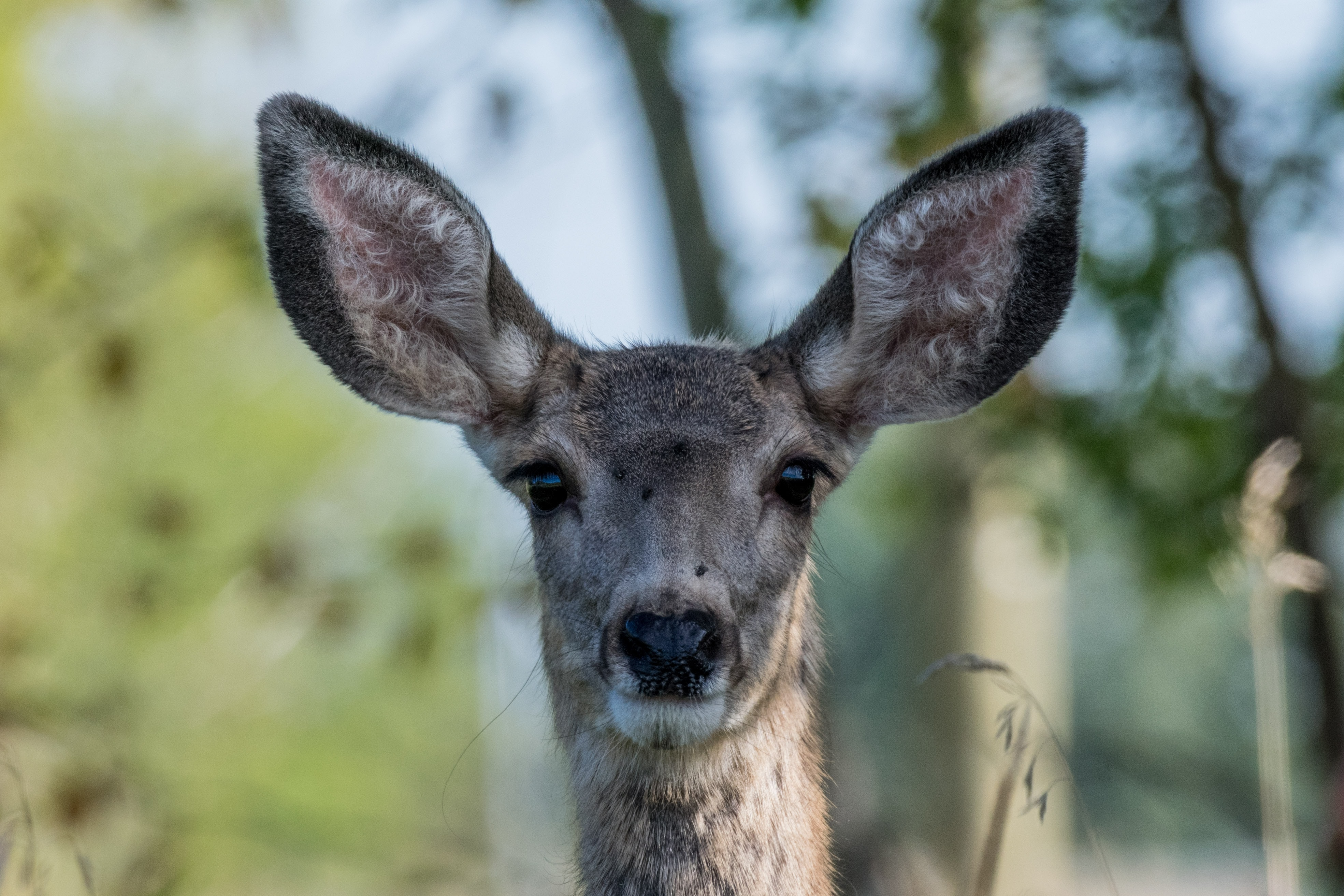 close-up photo of brown deer