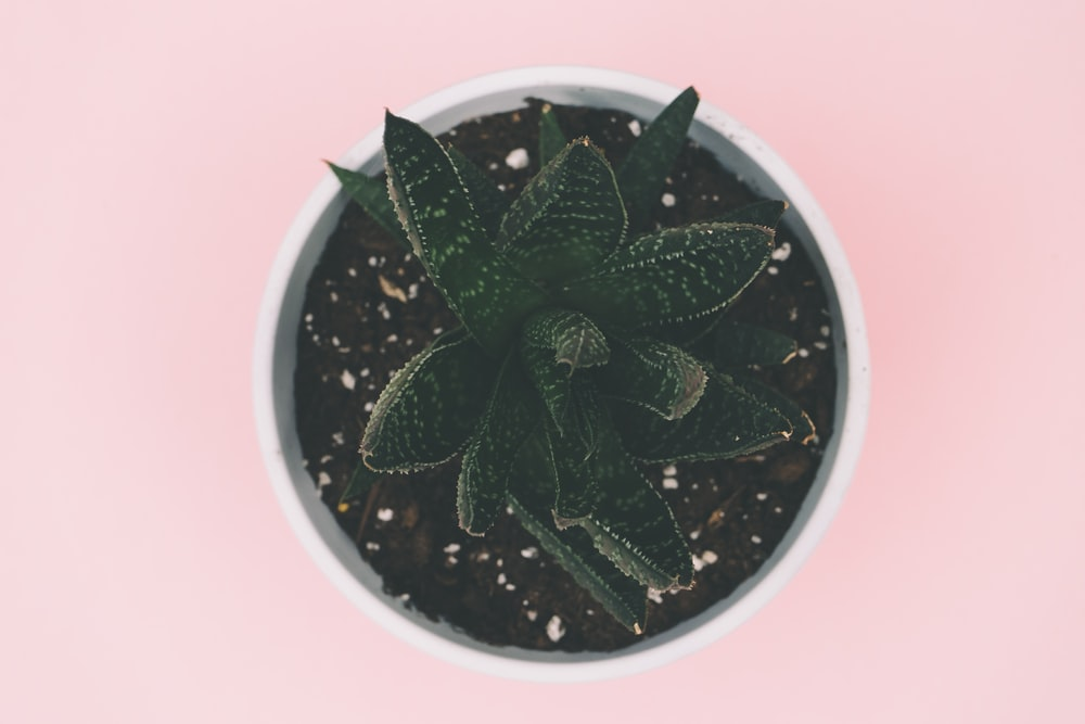 green succulent plant on white pot