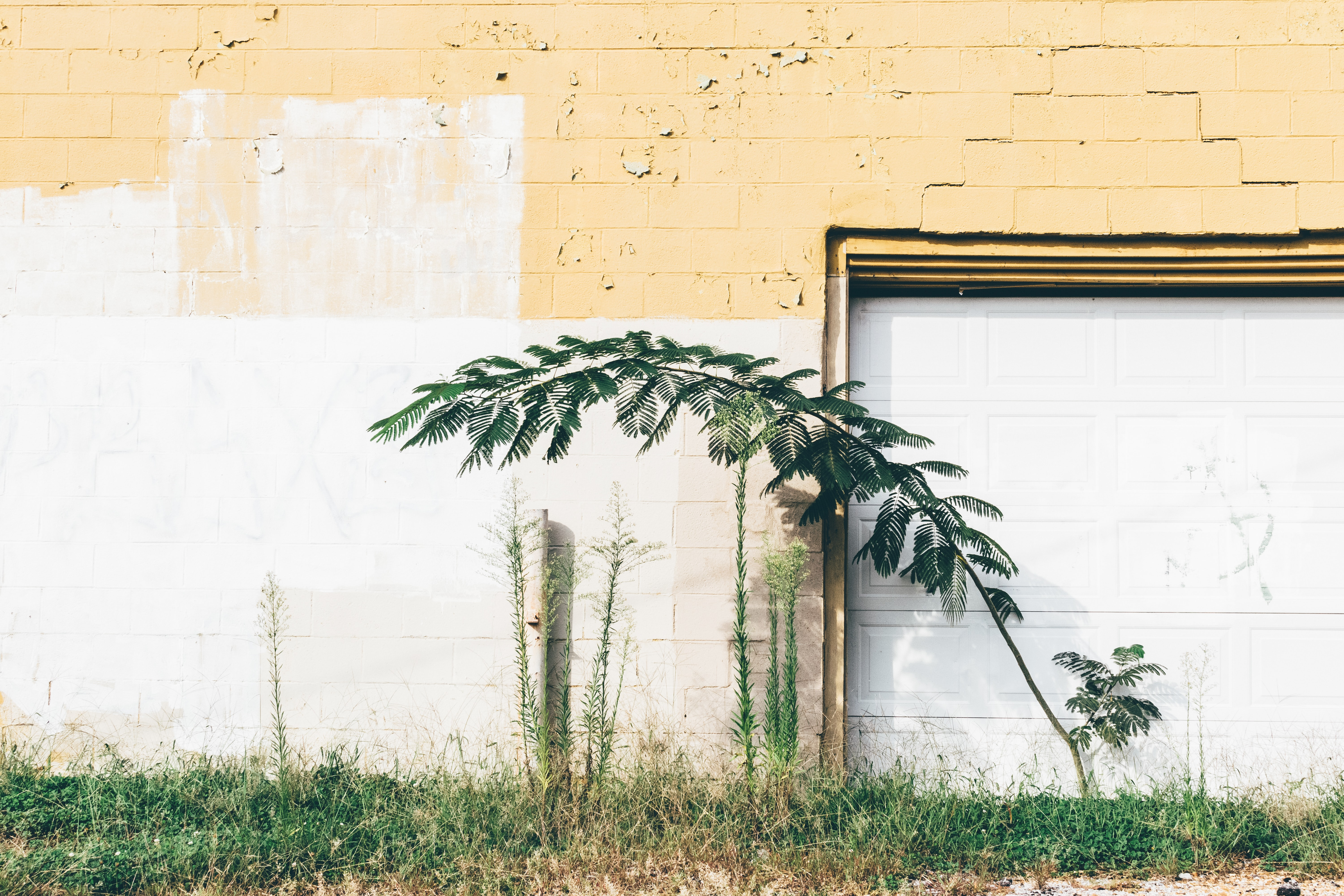 green leaf plant near brown and white painted wall during daytime