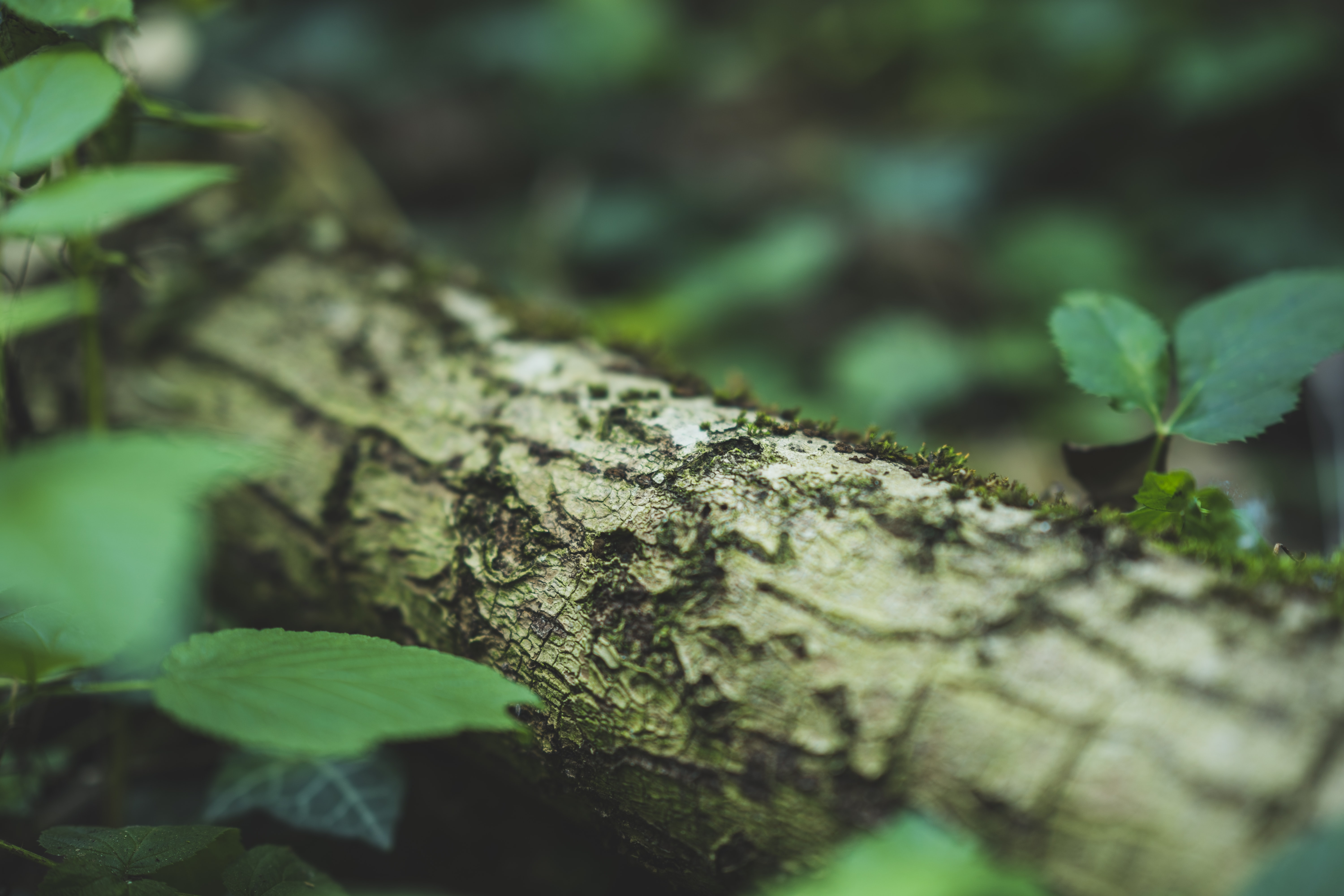 focus photography of tree bark