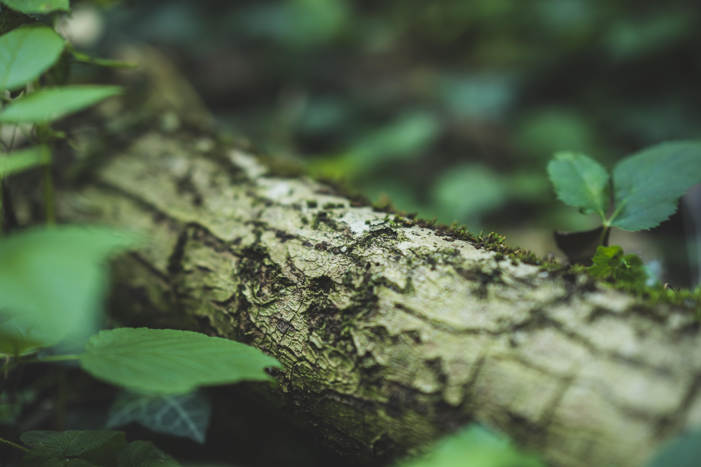 focus photography of tree bark