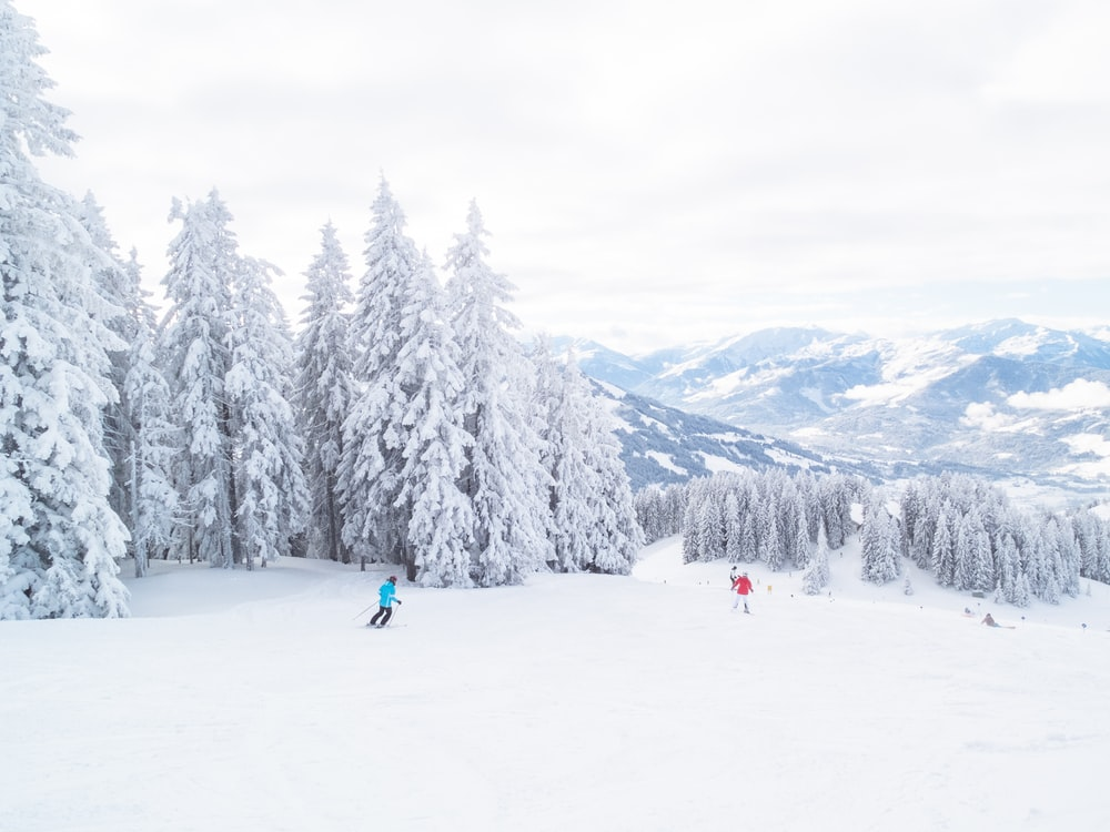 two person skiing on snow with trees during daytime
