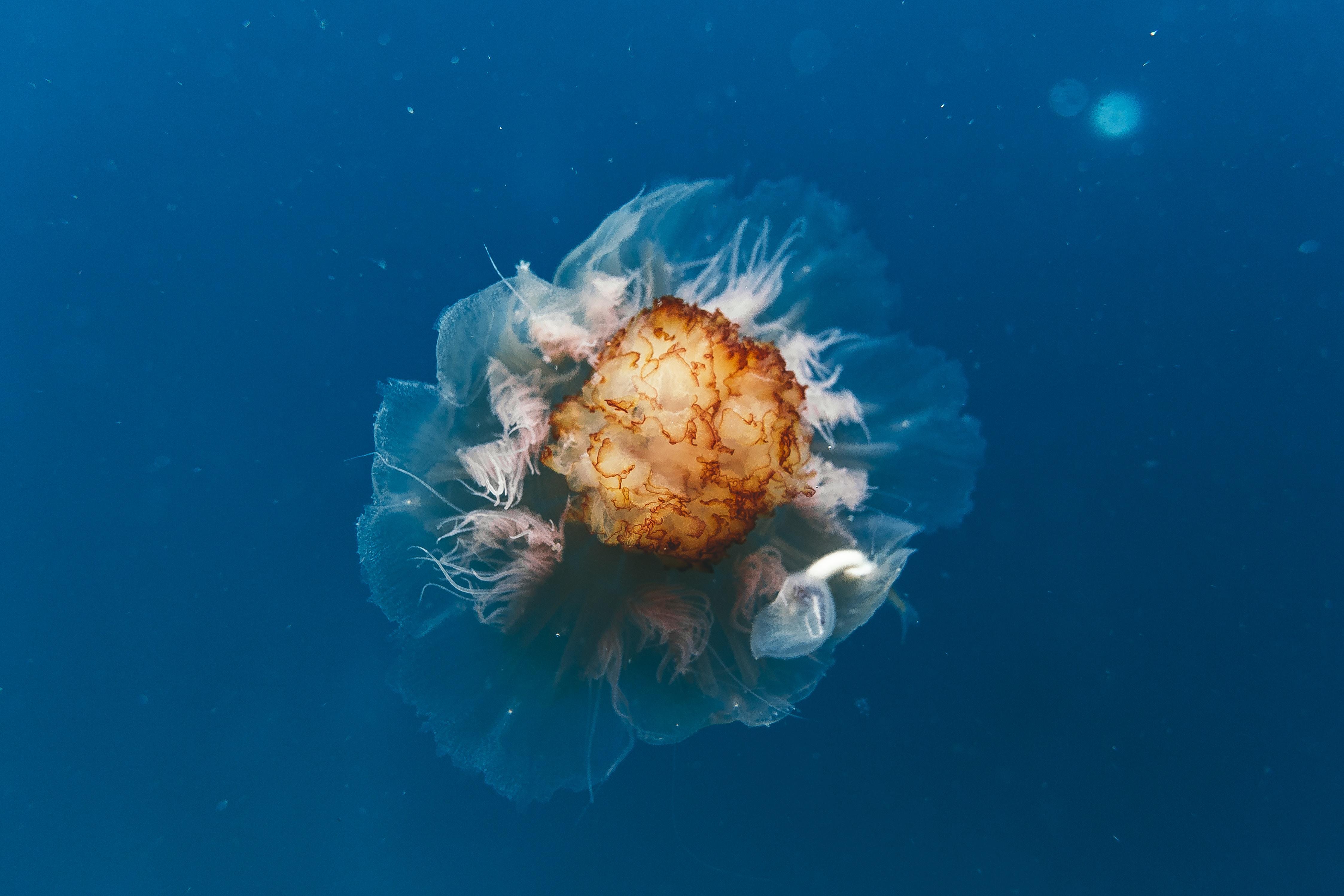photo of brown sea creature