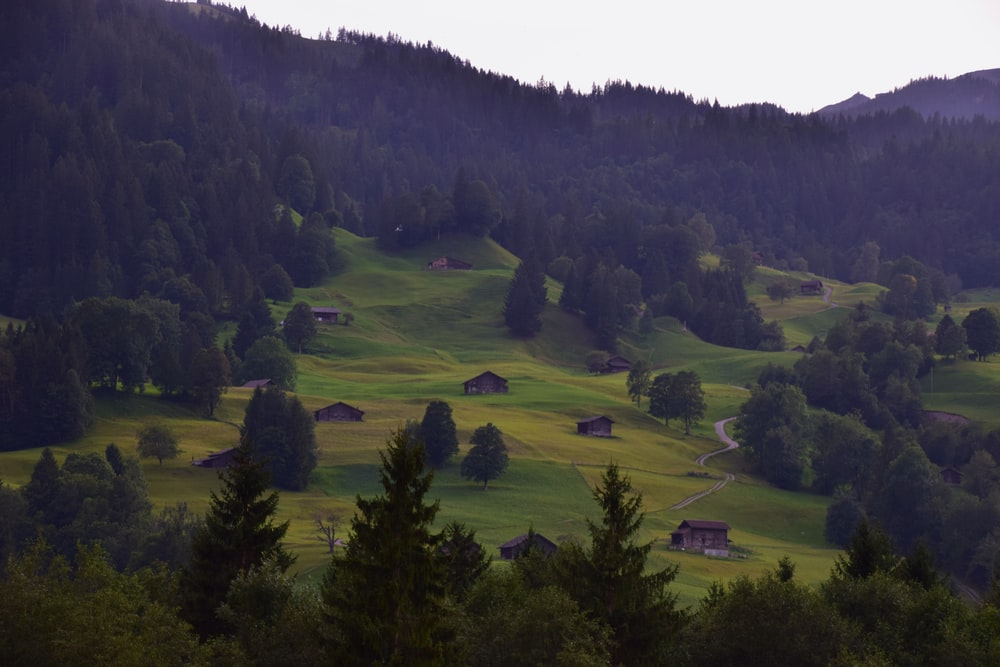 aerial view of hills and forests