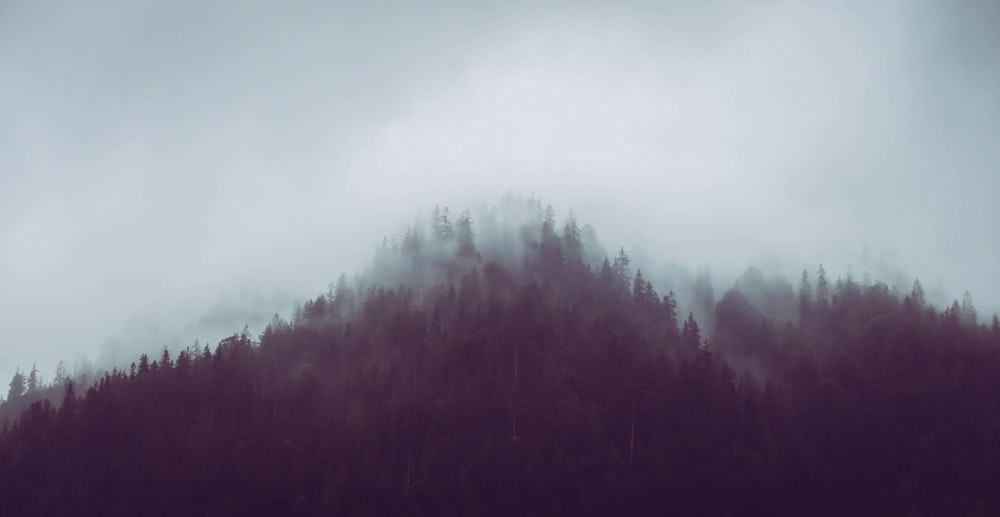 silhouette of trees while fogging