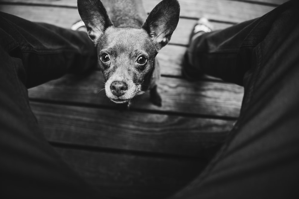 grayscale photo of short-coated dog on brown surface