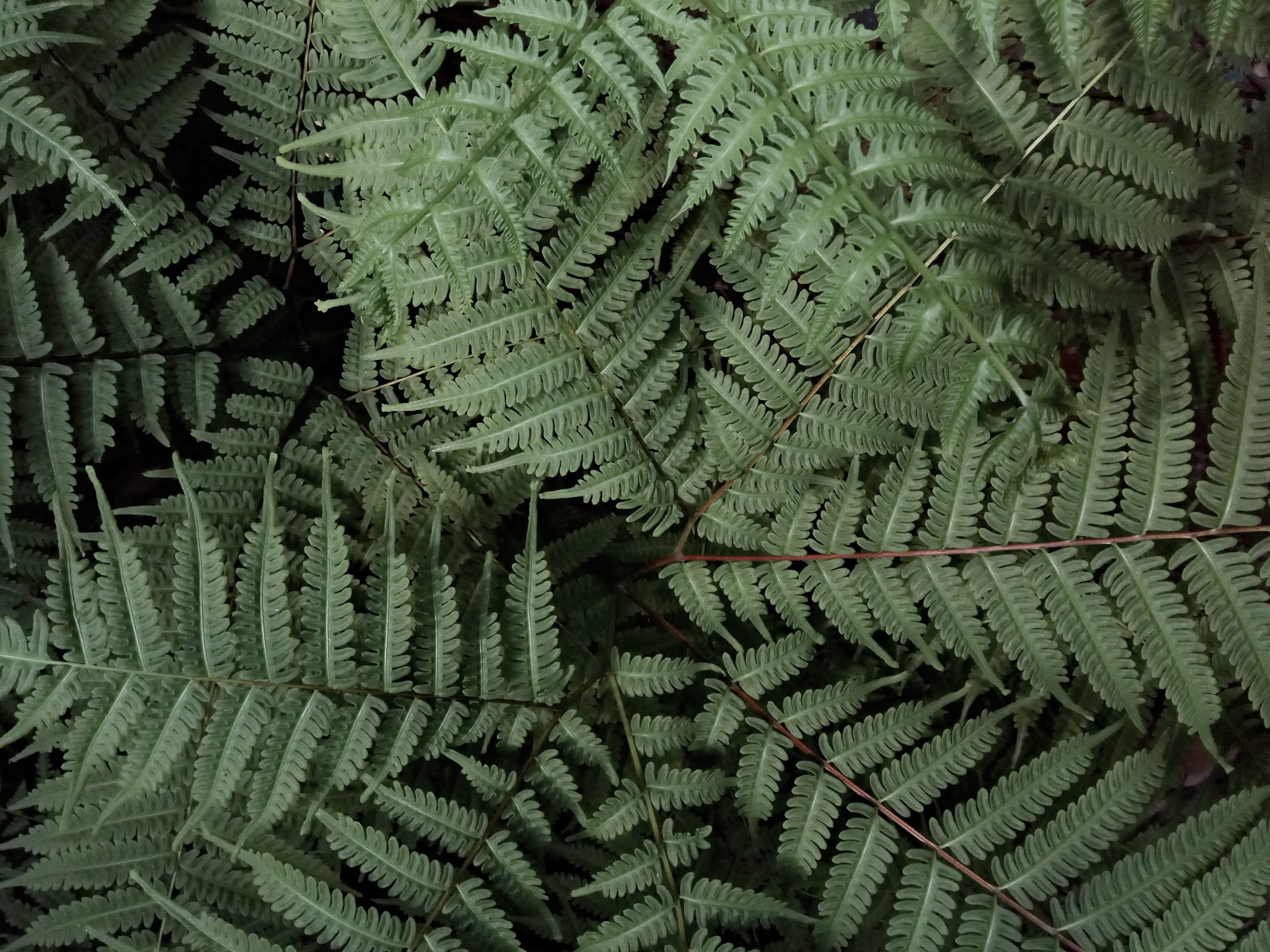 green fern plant on focus photo
