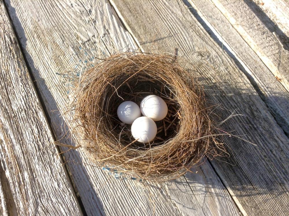 three white bird eggs in brown bird nest