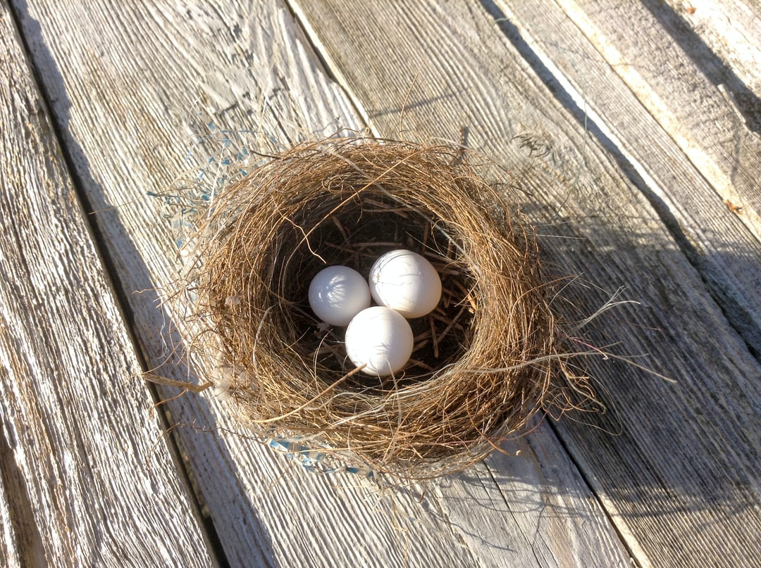 a real bird nest in my yard.