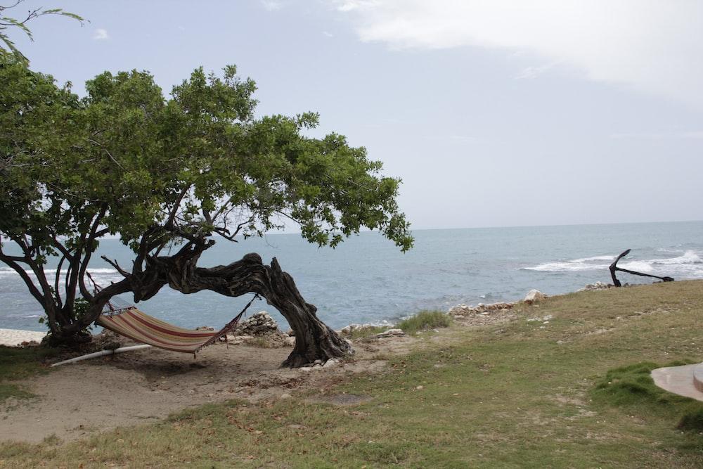 brown hammock hanging on trees near seashore during daytime