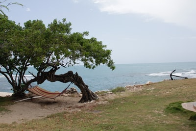 brown hammock hanging on trees near seashore during daytime jamaica zoom background