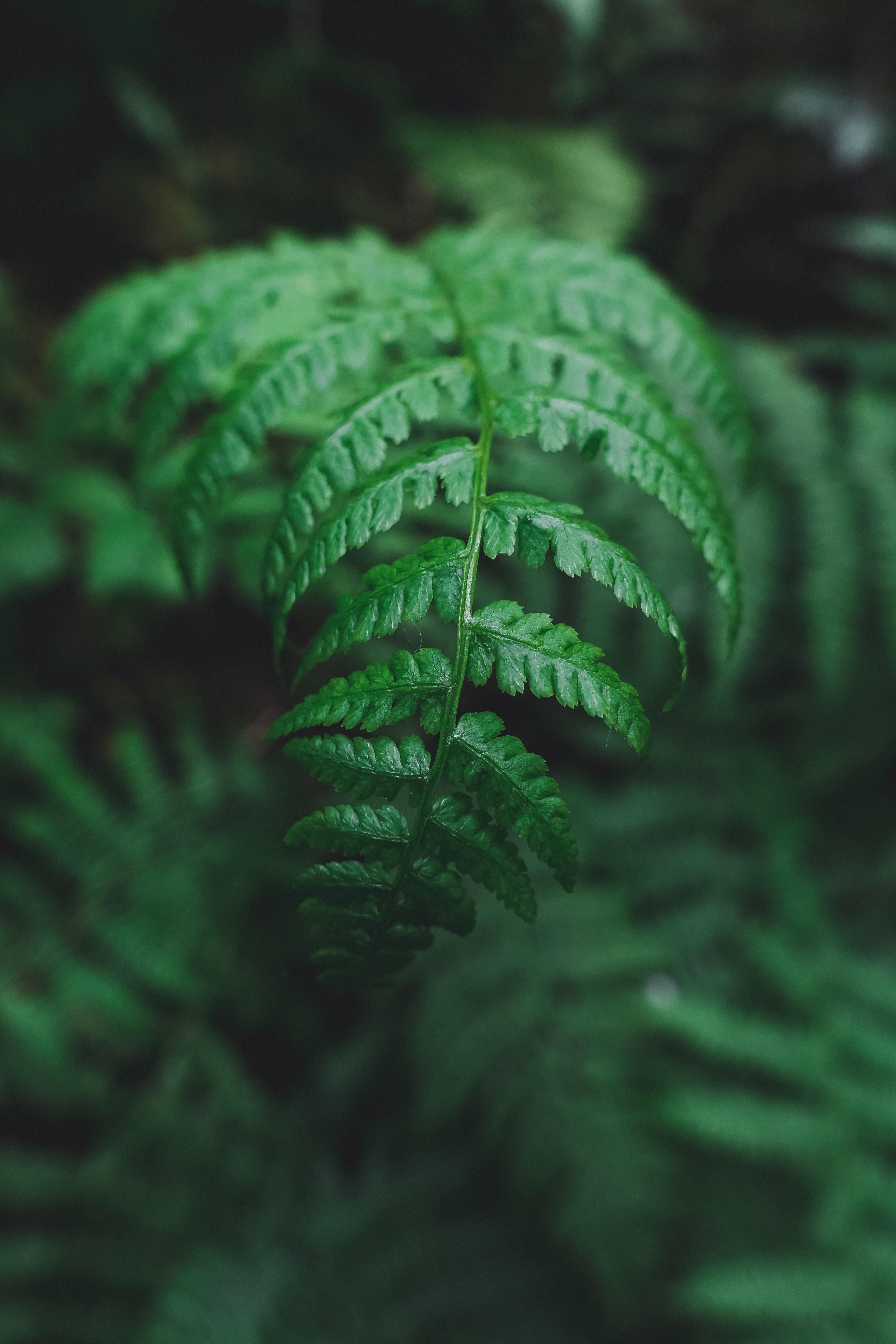 selective macro photography of green fern