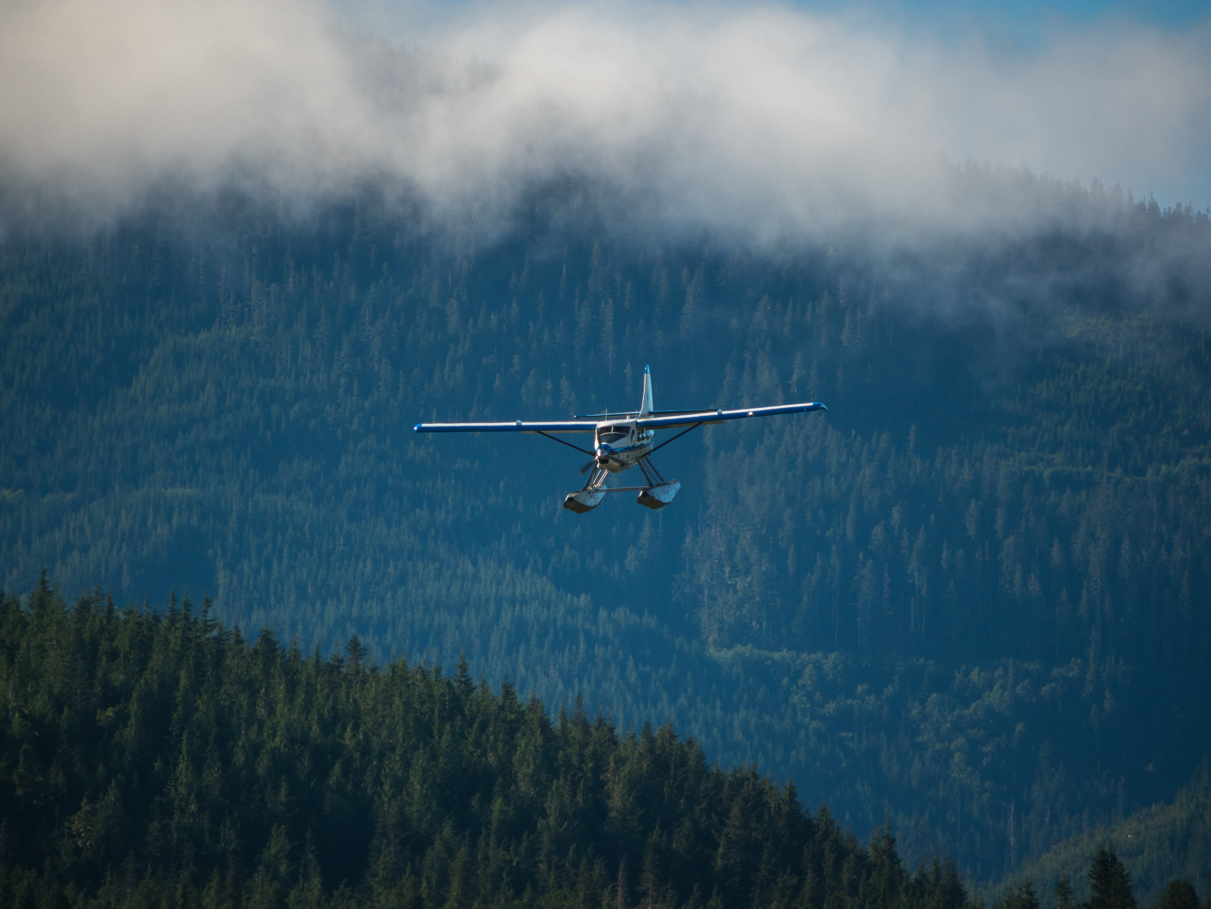 airplane above mountain covered in trees