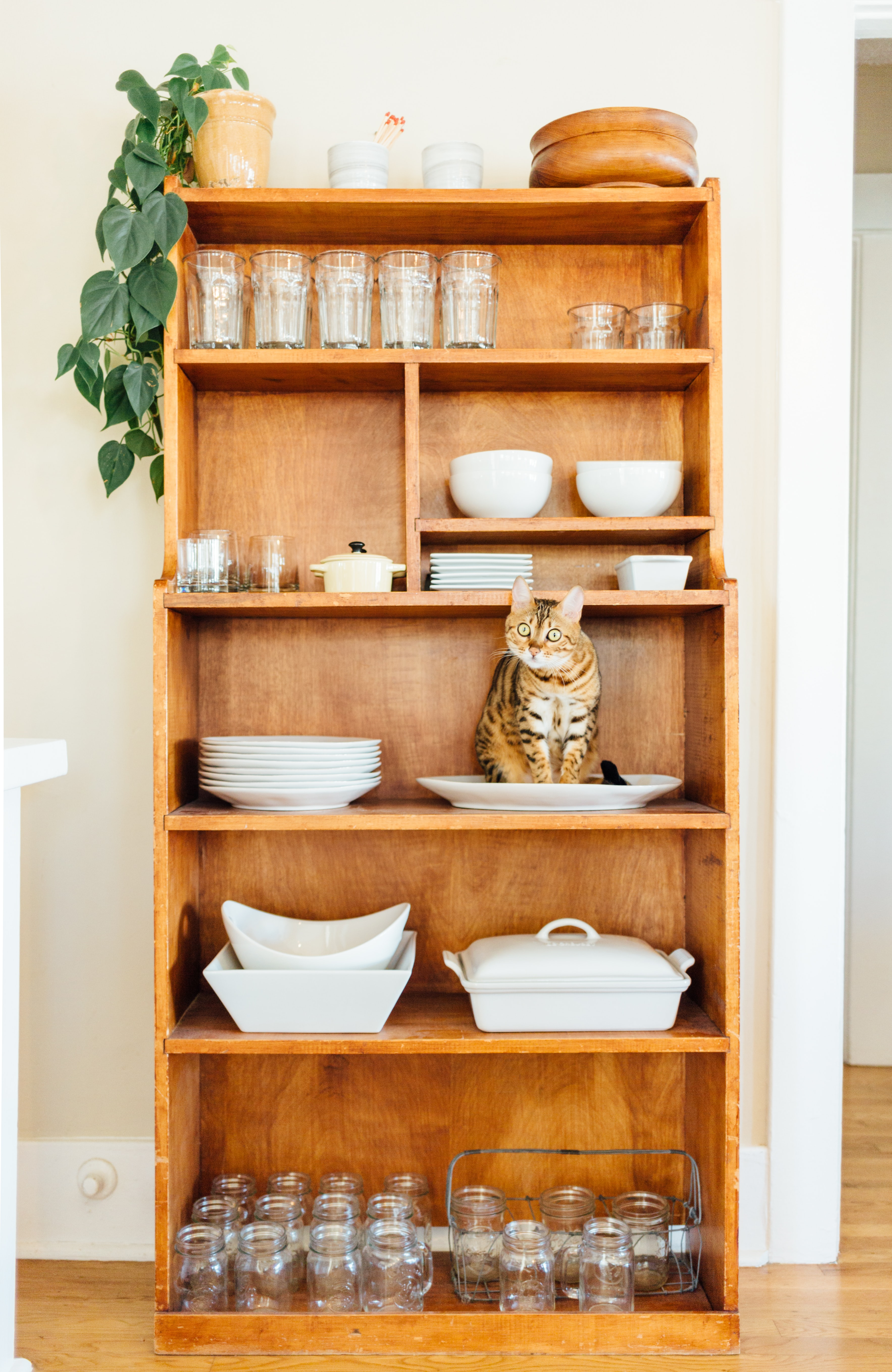gray tabby cat on brown wooden shelves with cutleries inside house