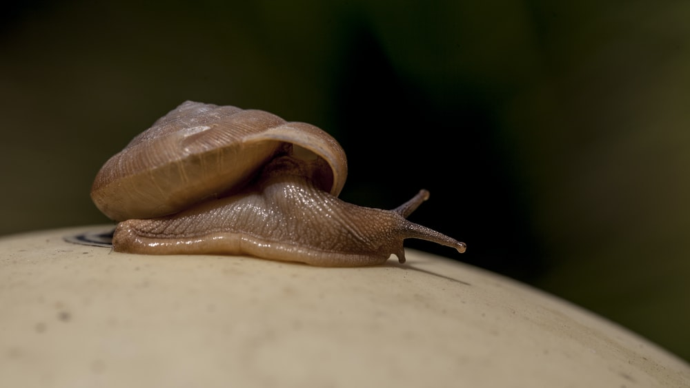 selective focus photography of brown snail