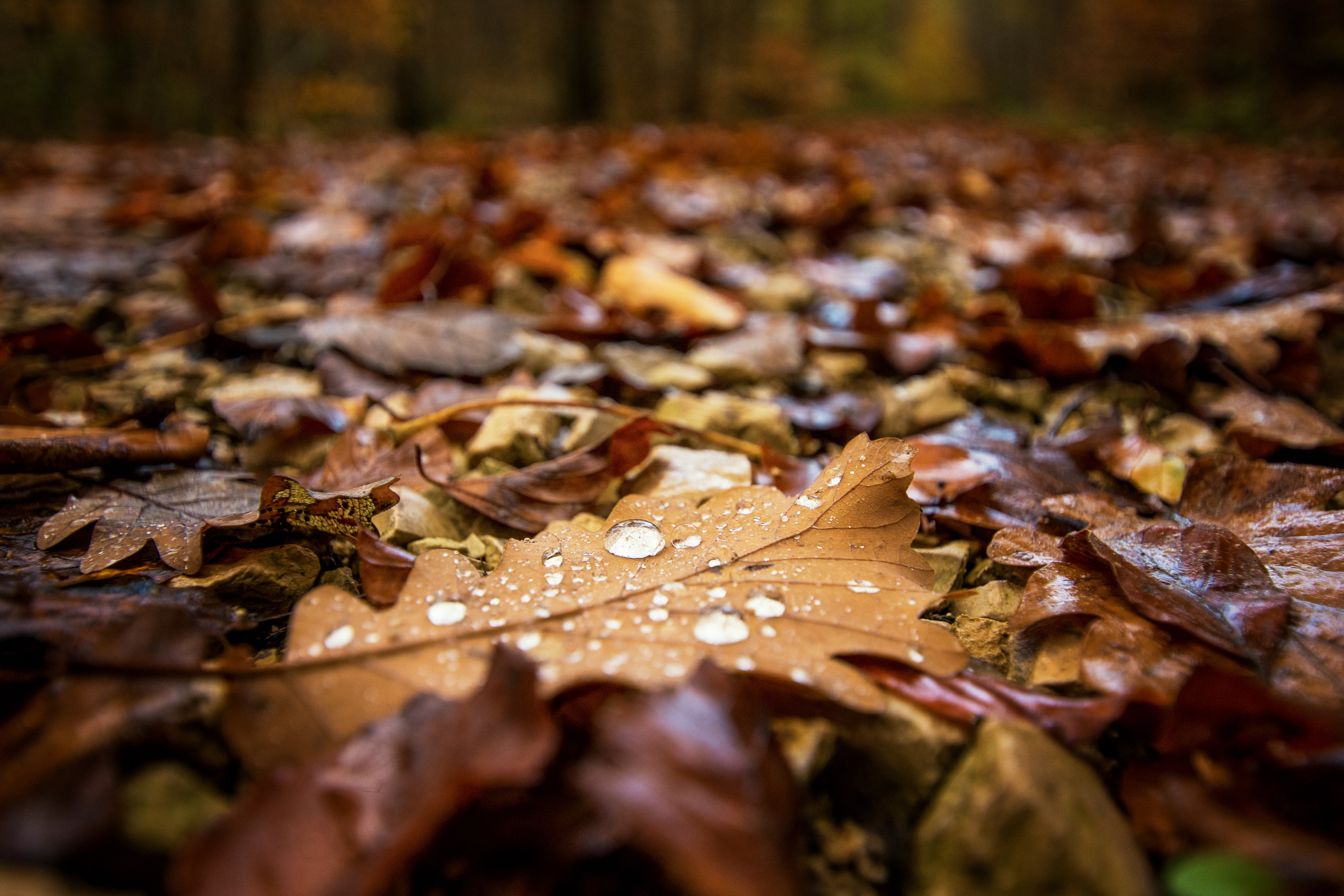 selective focus photography of withered leaves