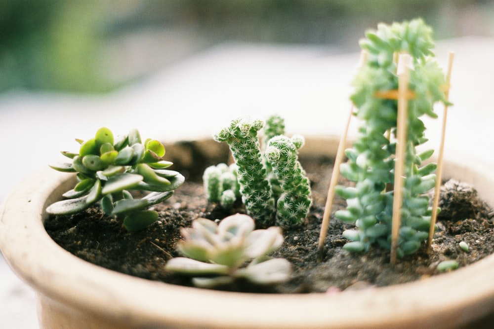 close up photo of green succulent plant