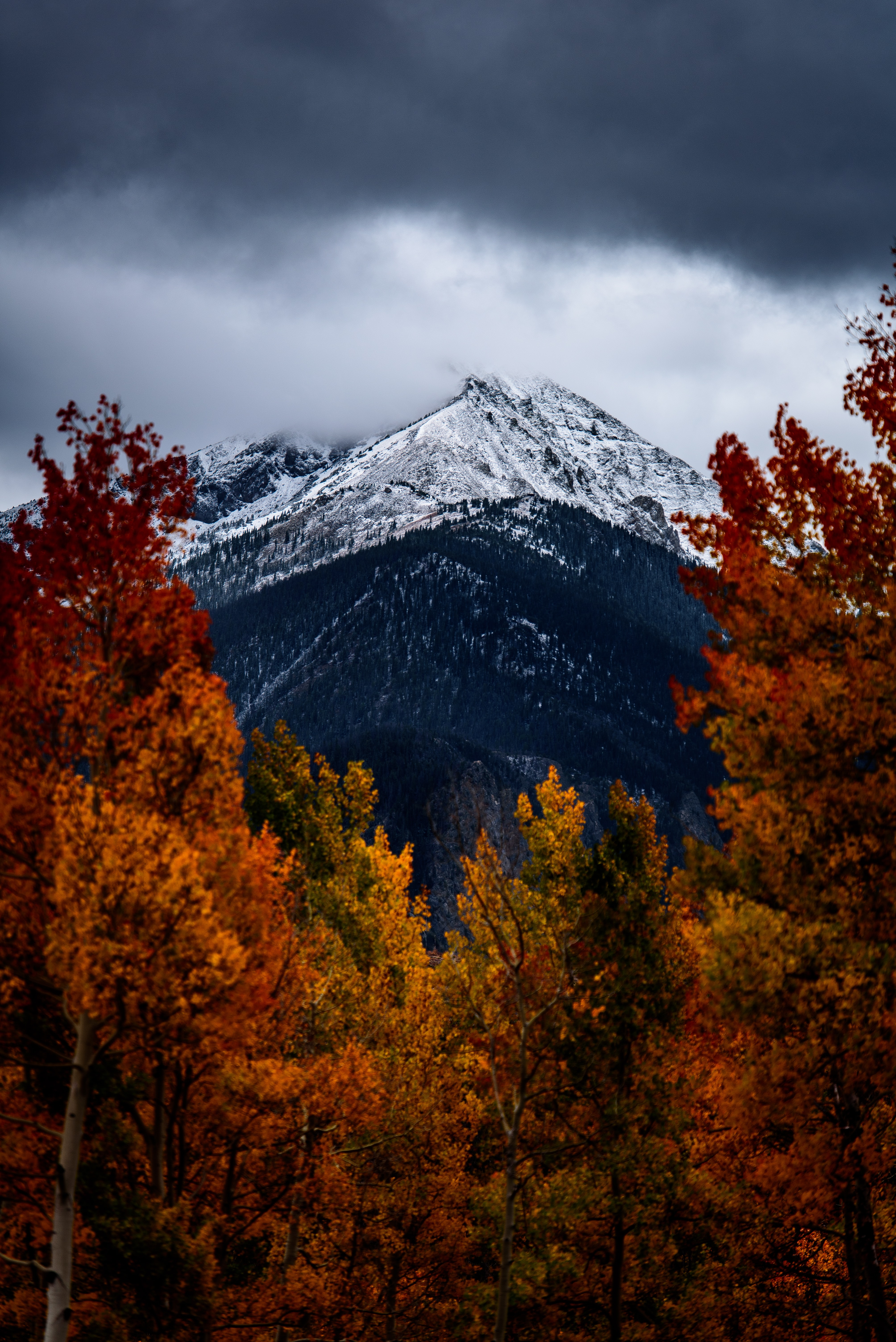 brown leafed trees in front of snow covered mountain under cloudy sky