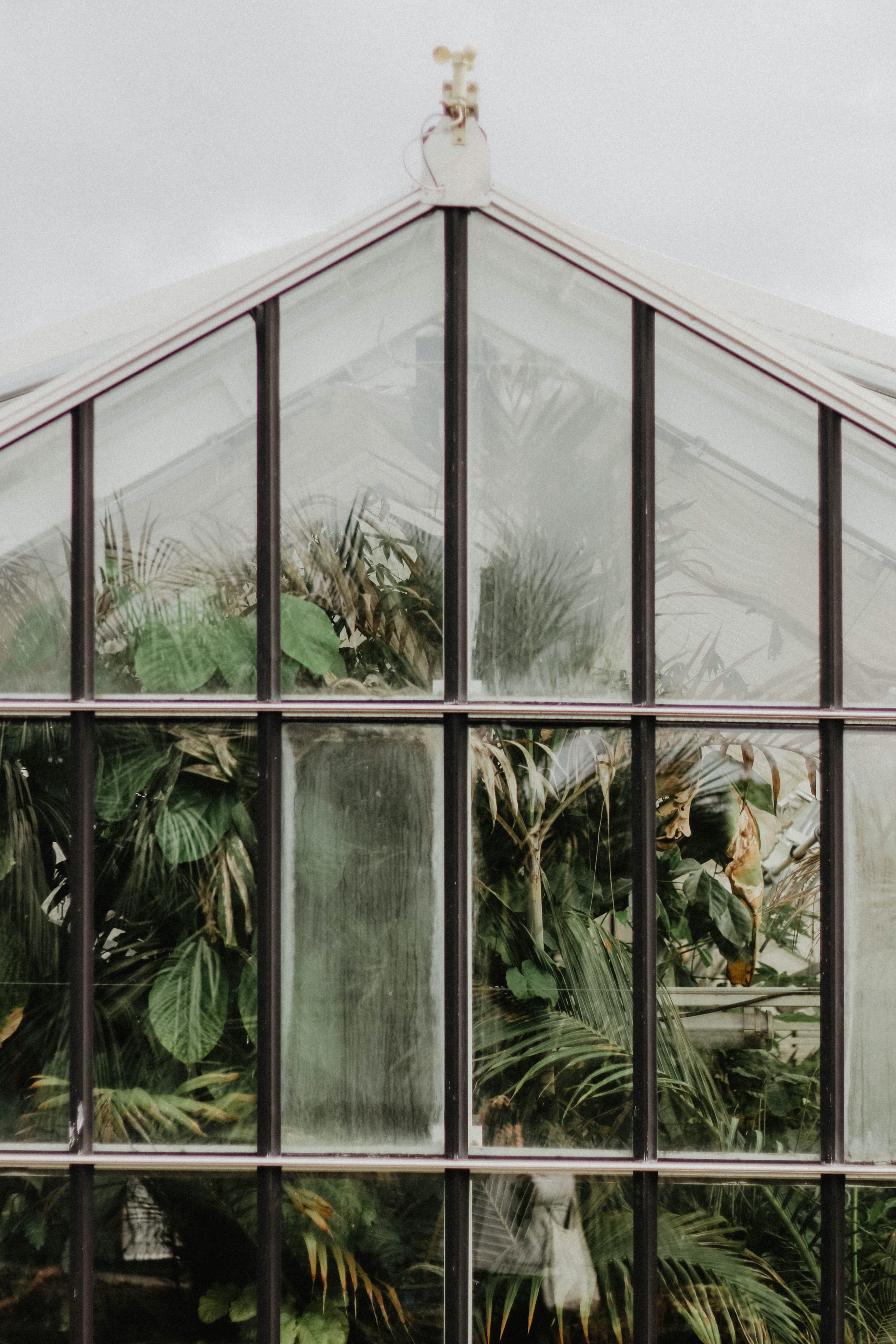 black multi-panel windowpane