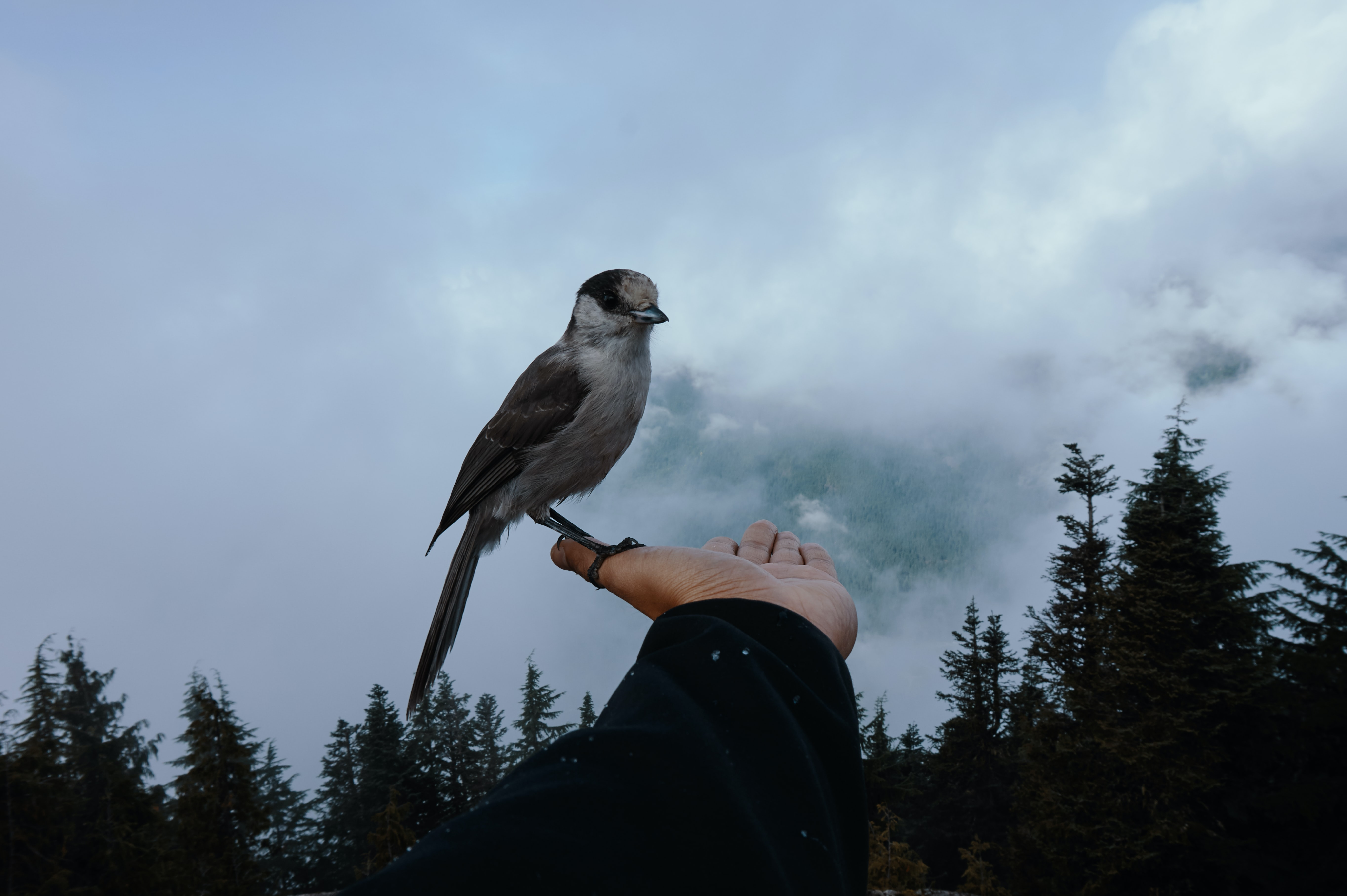 bird on person's thumb during daytime