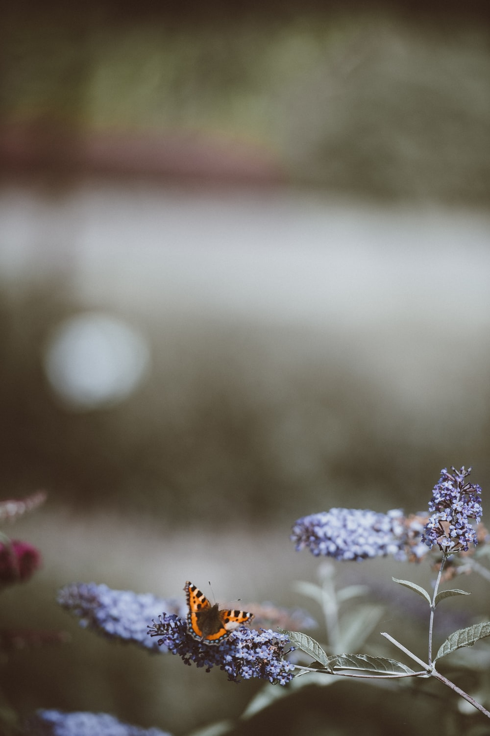 focus photography of butterfly on flower during daytime