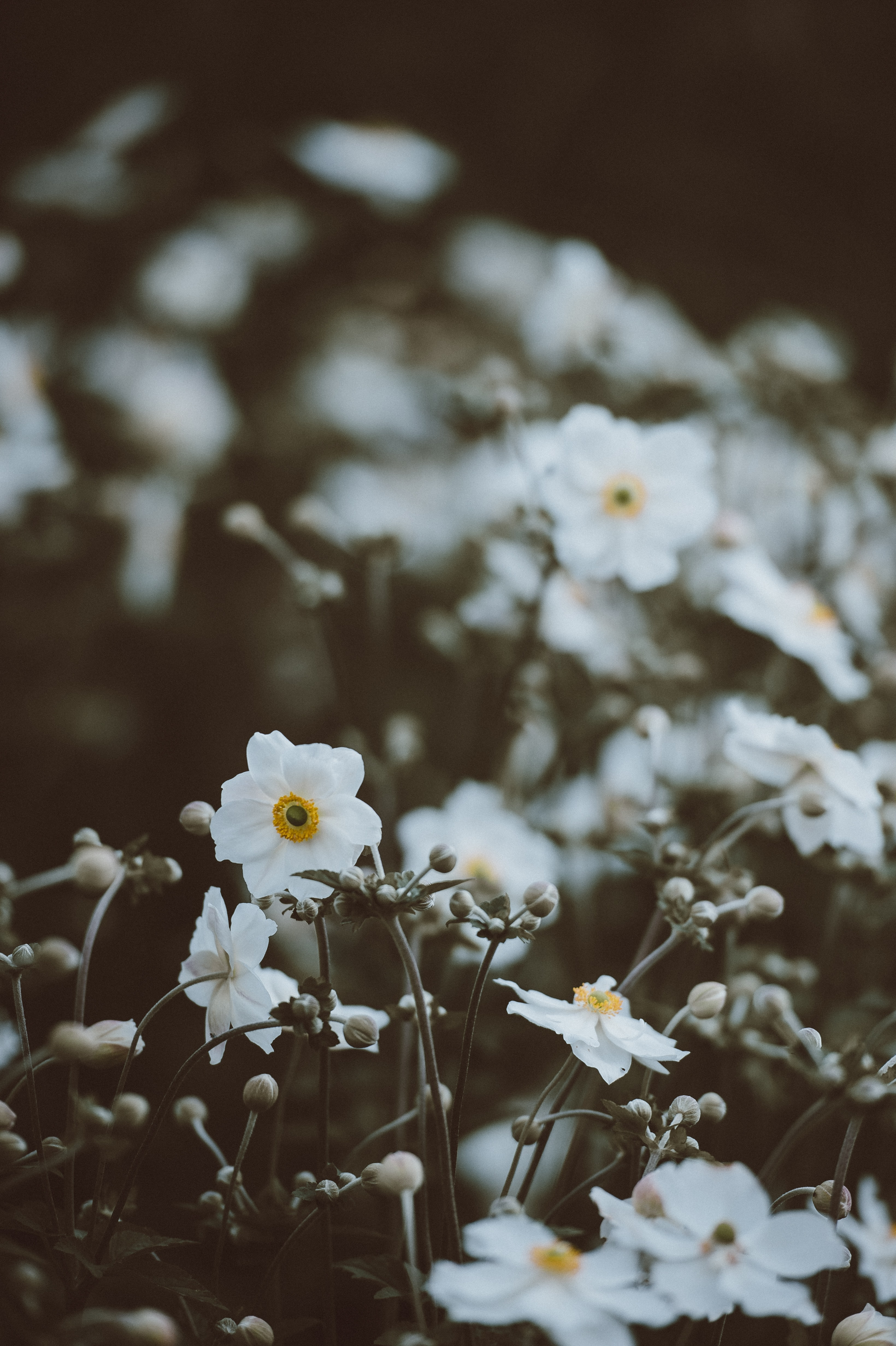 selective photography of white petaled flower