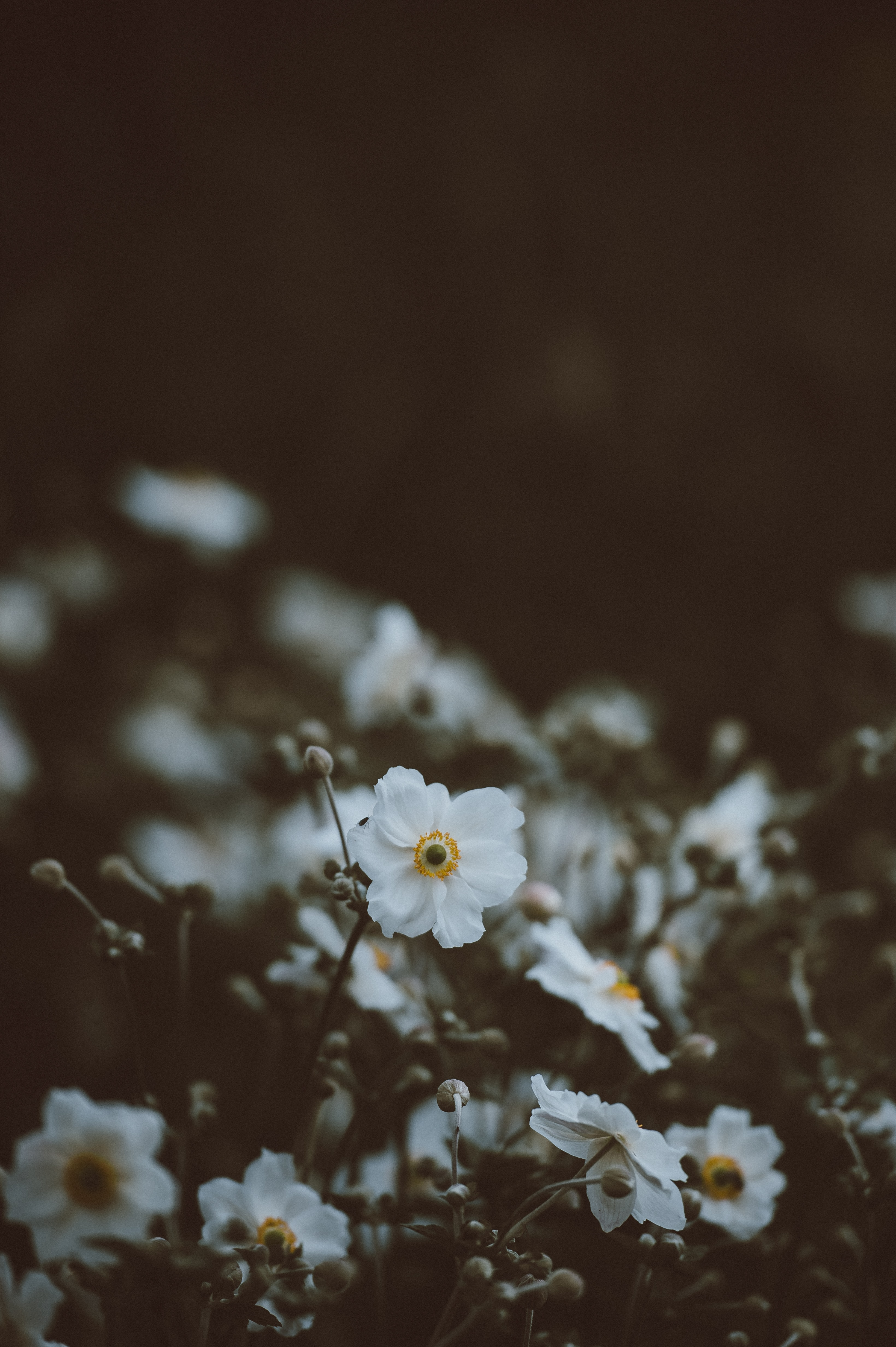 selective focus photo of bloomed white petaled flowers