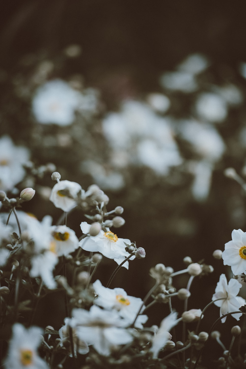 selective focus photography of white-and-yellow petaled flowers