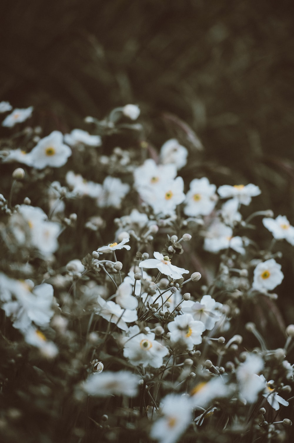 white petaled flowers in focus photography at daytime