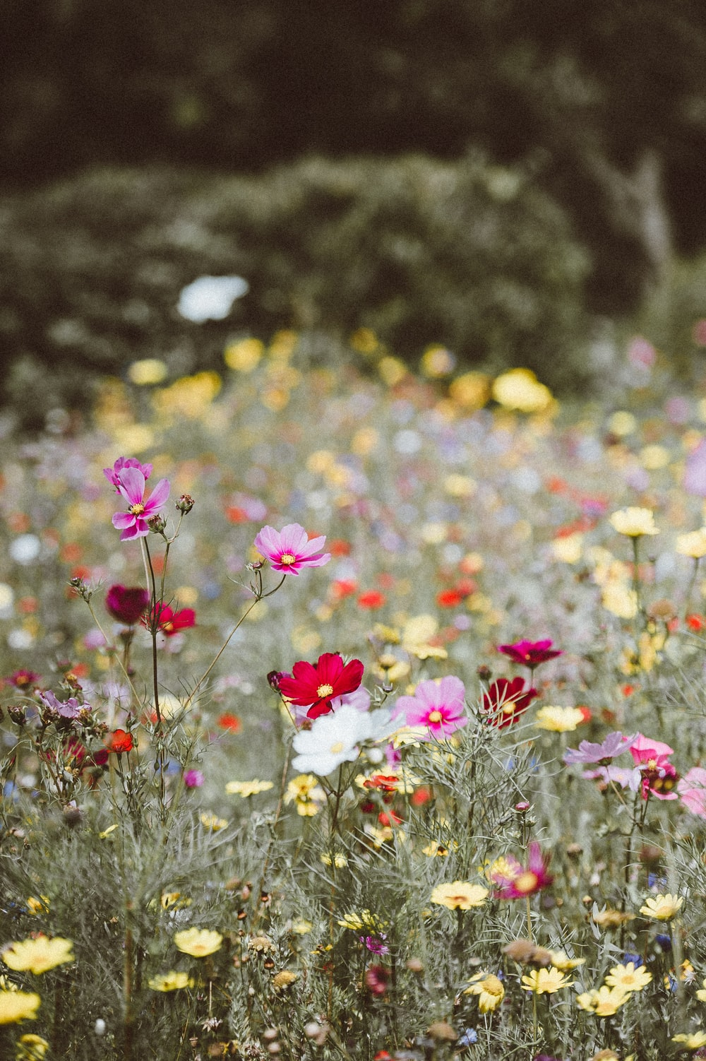 assorted-color petaled flowers field