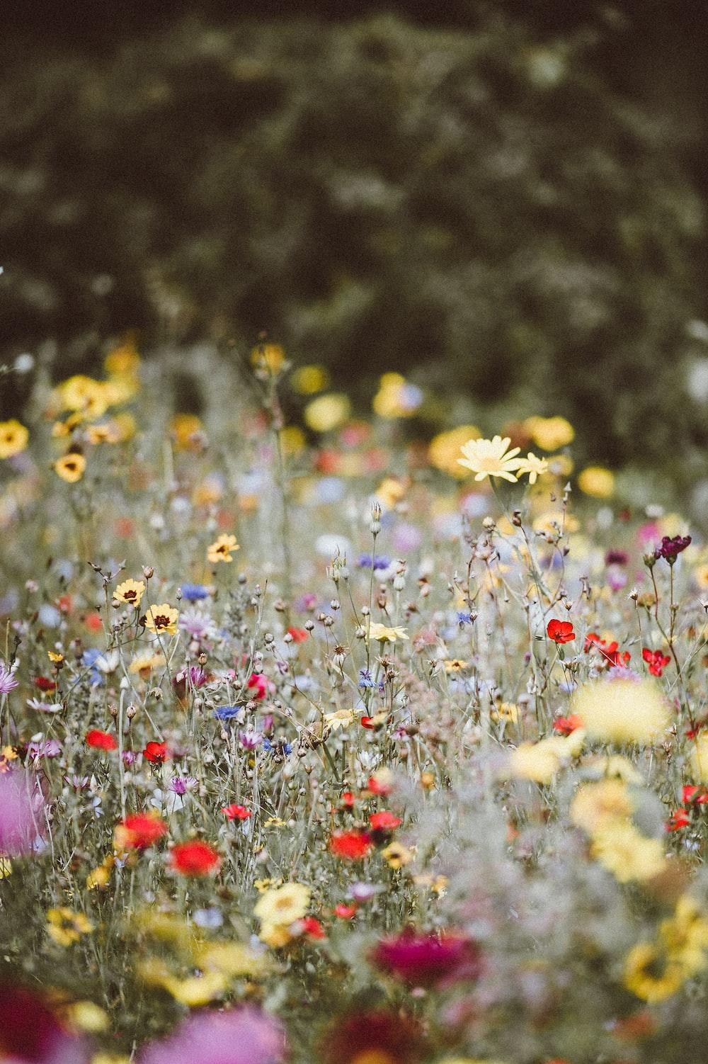 garden flowers photography