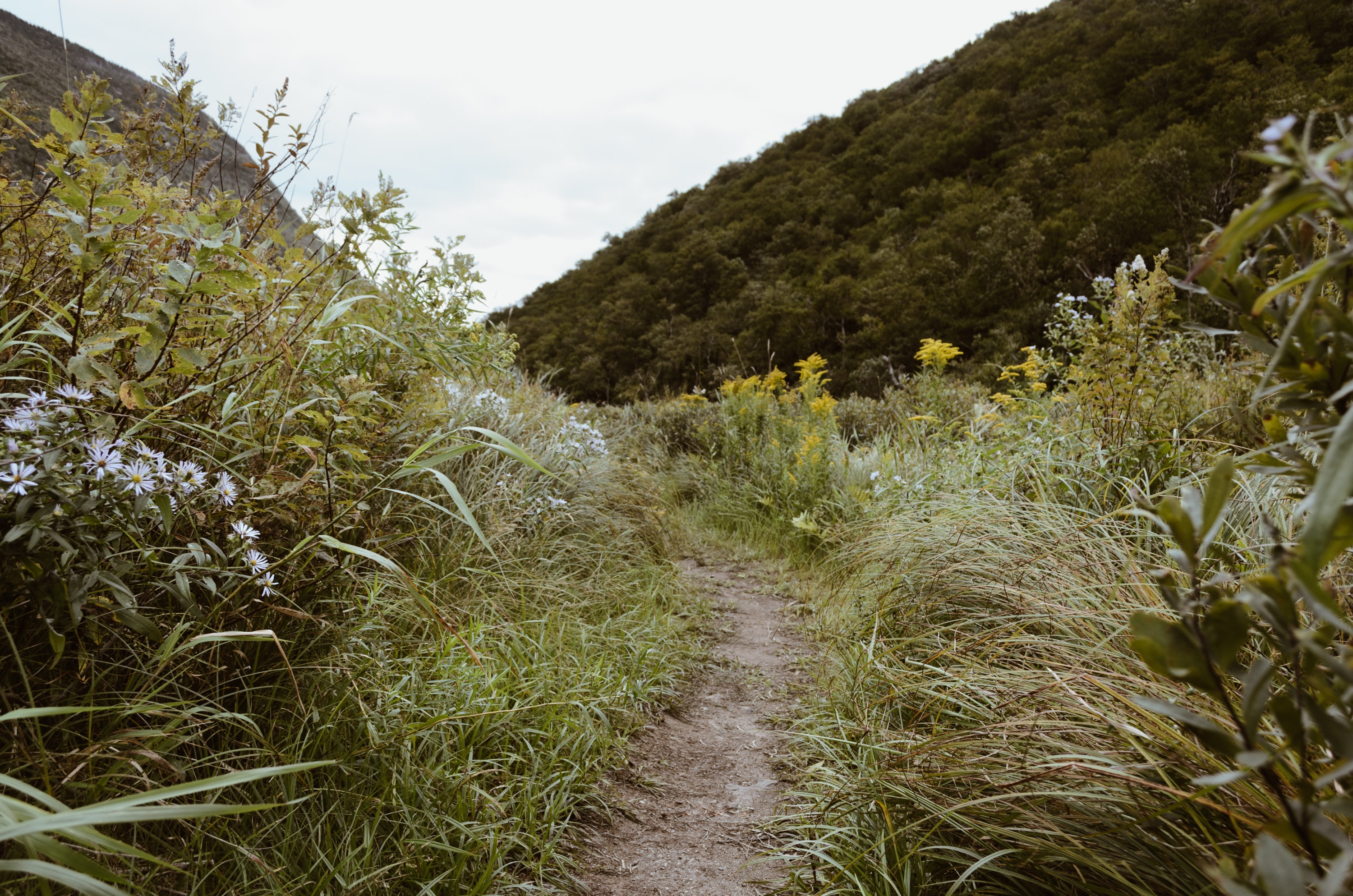 pathway on grass field beside on hill during daytime
