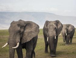 Ngorongoro-Krater Pirschfahrt – Tarangire Natioanlpark