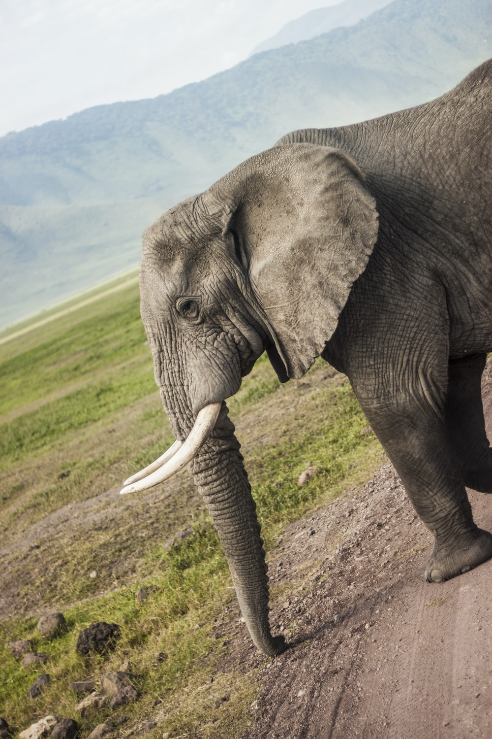 brown elephant standing on pathway during daytime