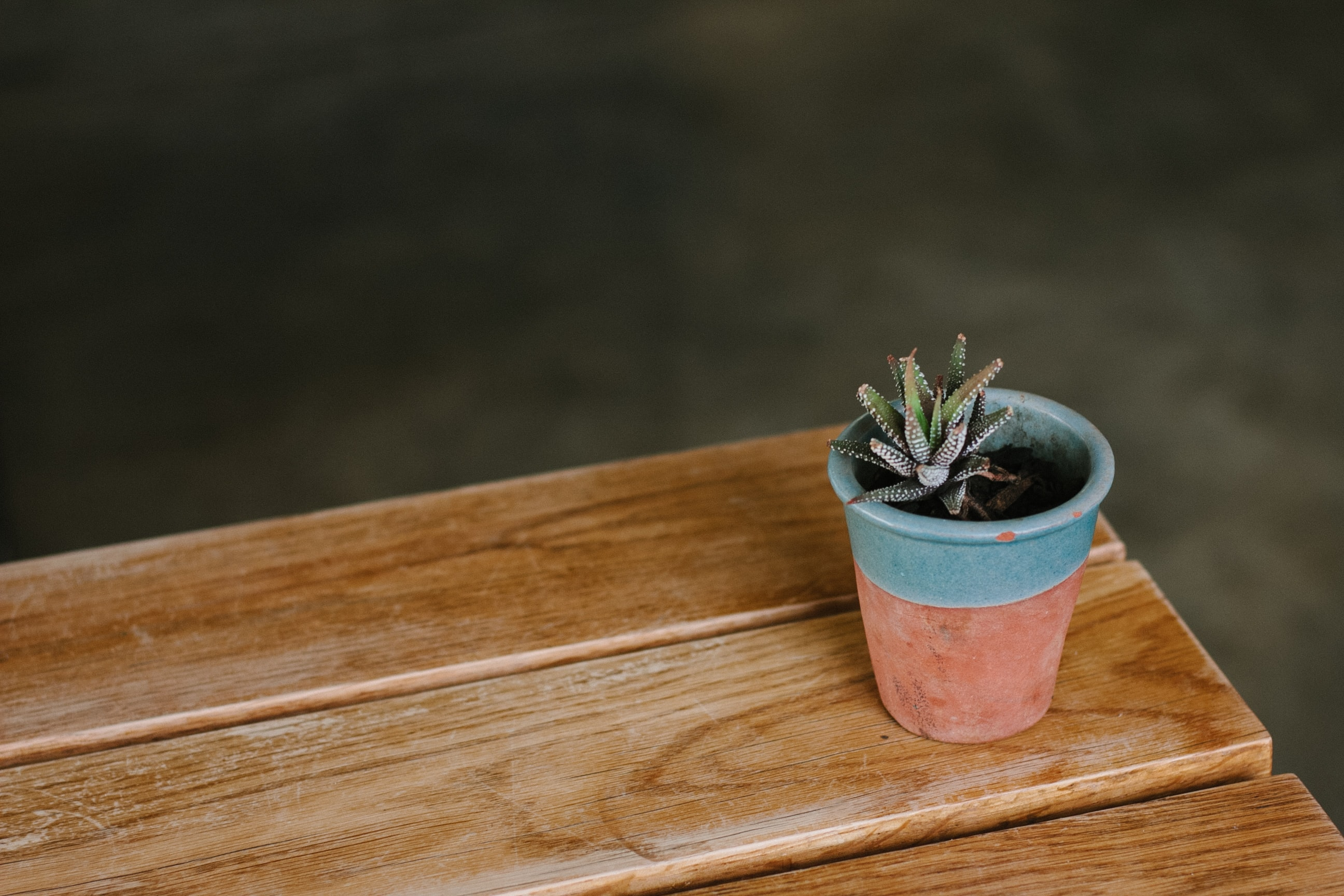succulent in blue and brown pot