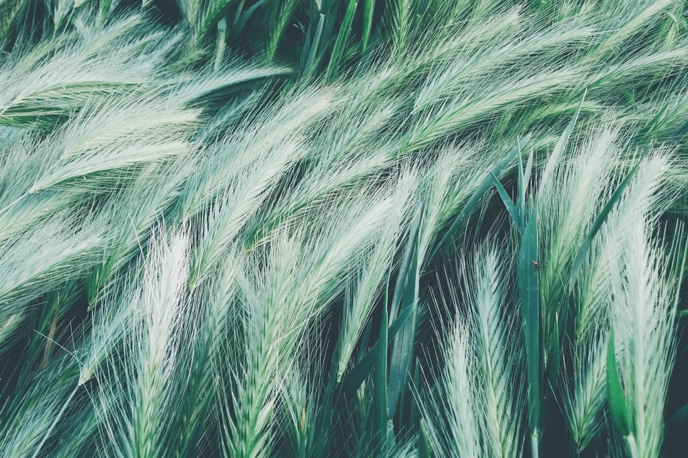 white and green feathers