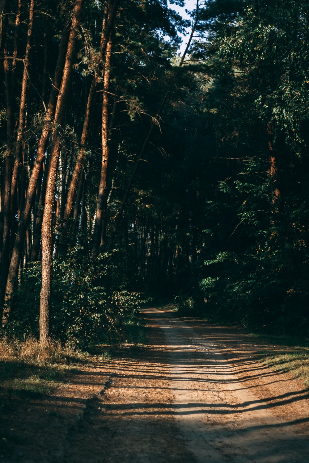 dirt road surrounded by trees during daytme