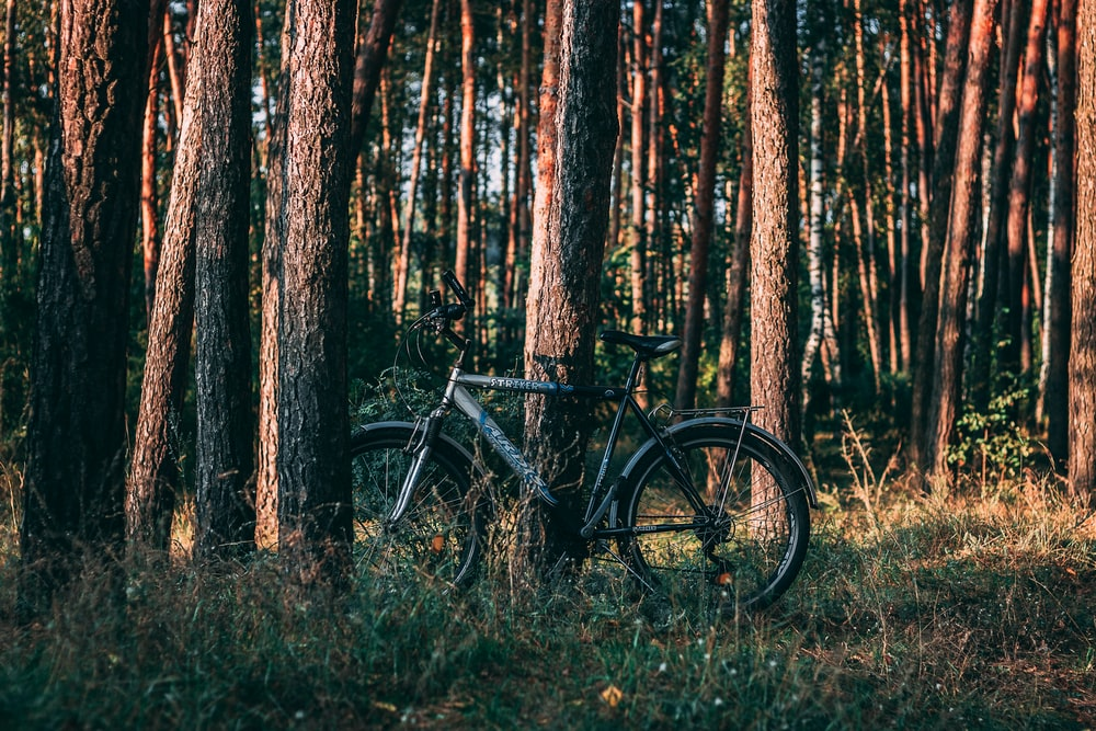 gray bicycle surrounded by trees during daytime