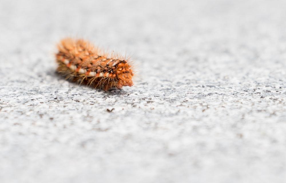 shallow focus photography brown caterpillar