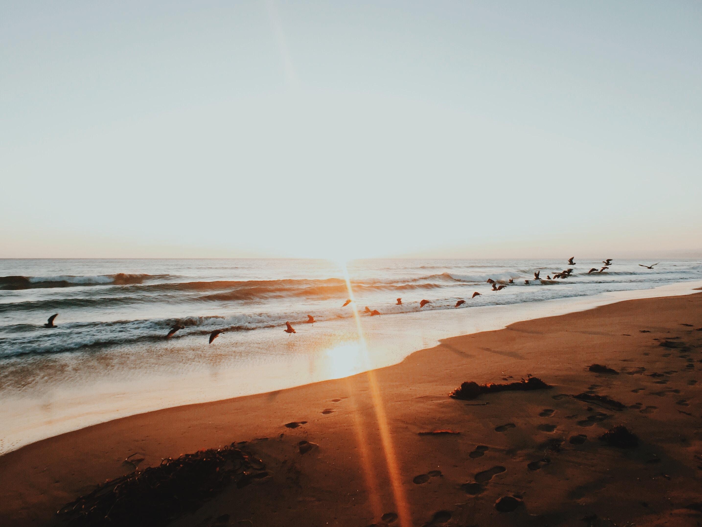 birds flew above shoreline during dusk
