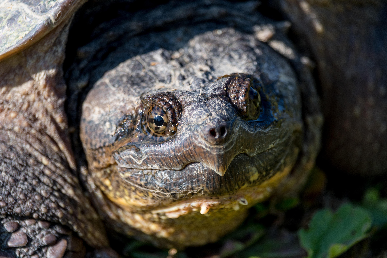 focus photo of turtle