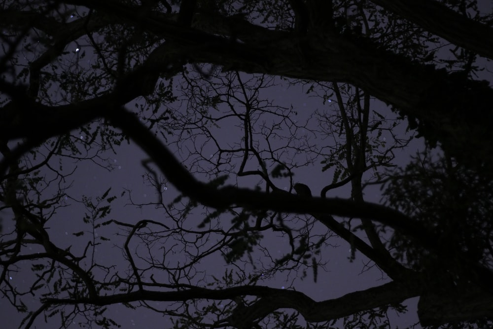 silhouette photography of withered tree