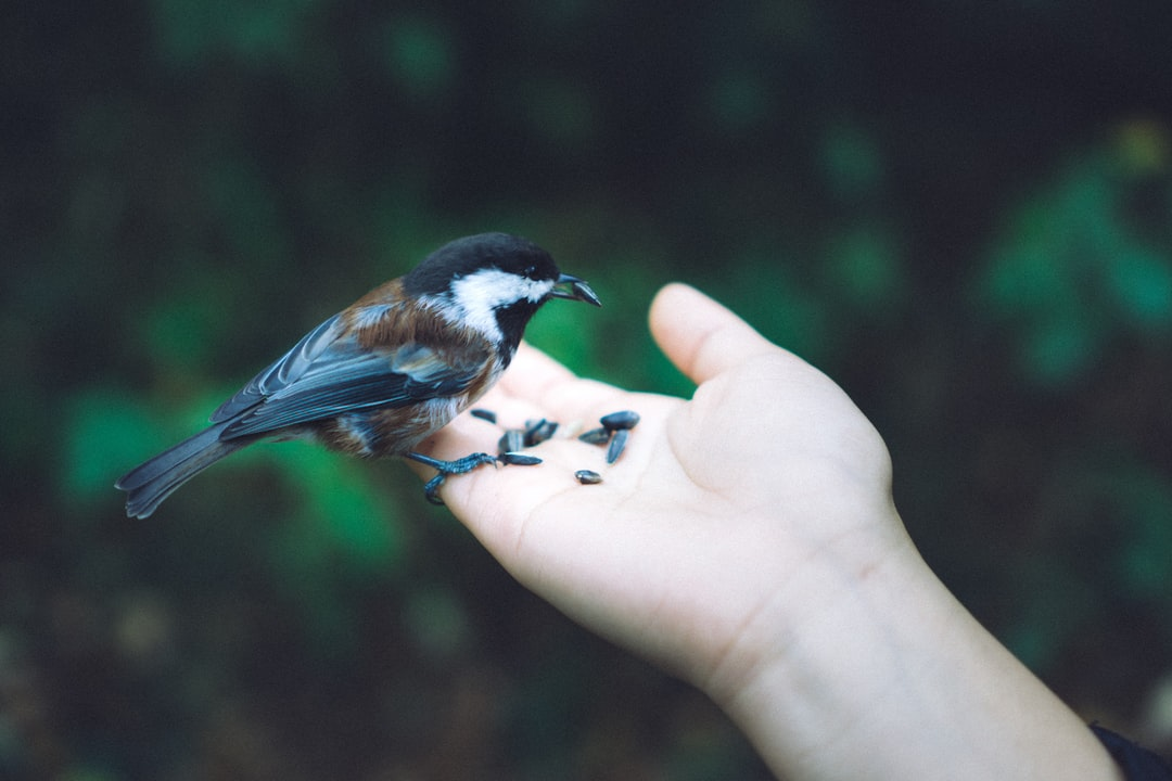 black and brown bird on right human hand