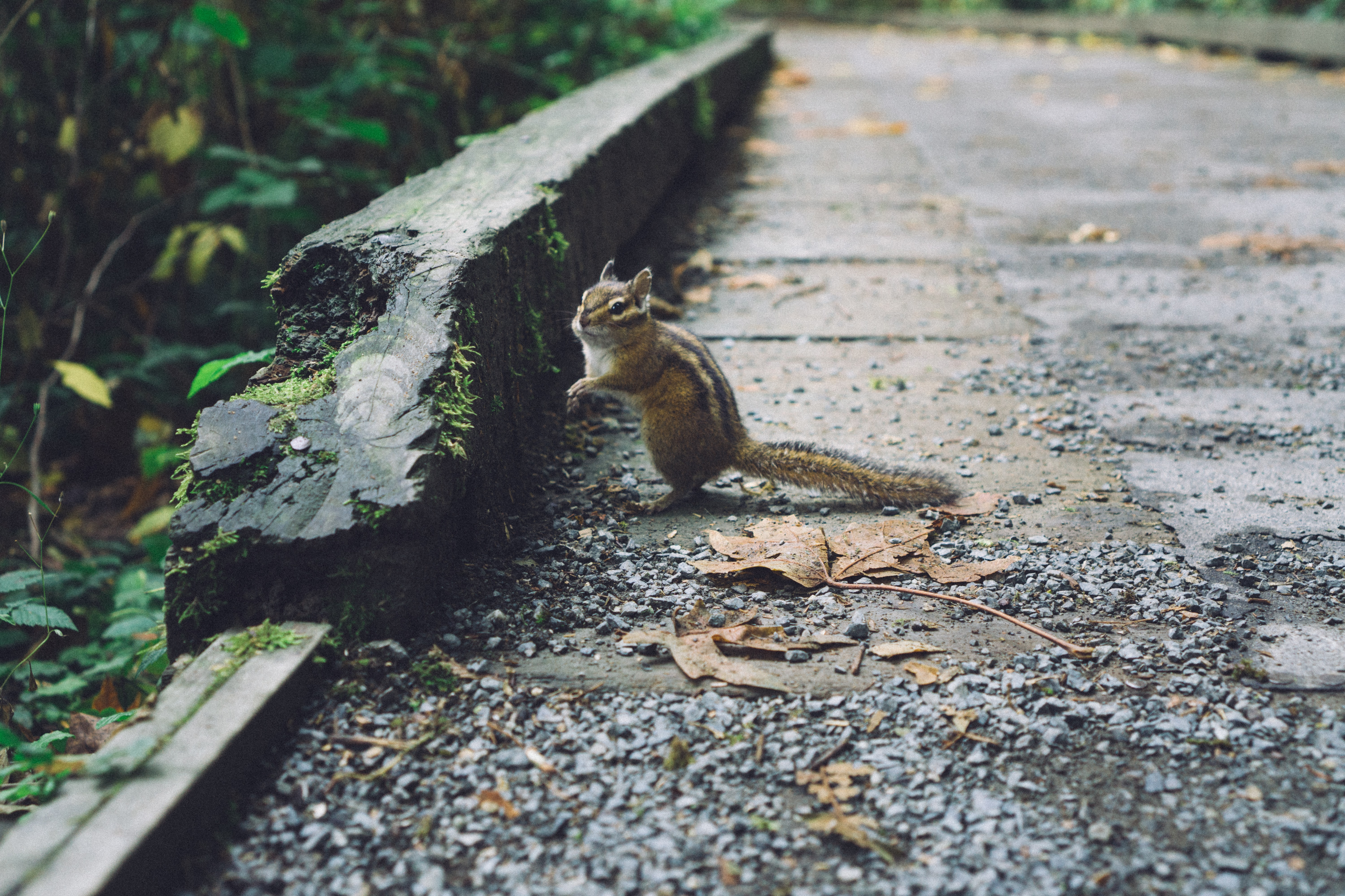 selective focus photography of squirrel on road