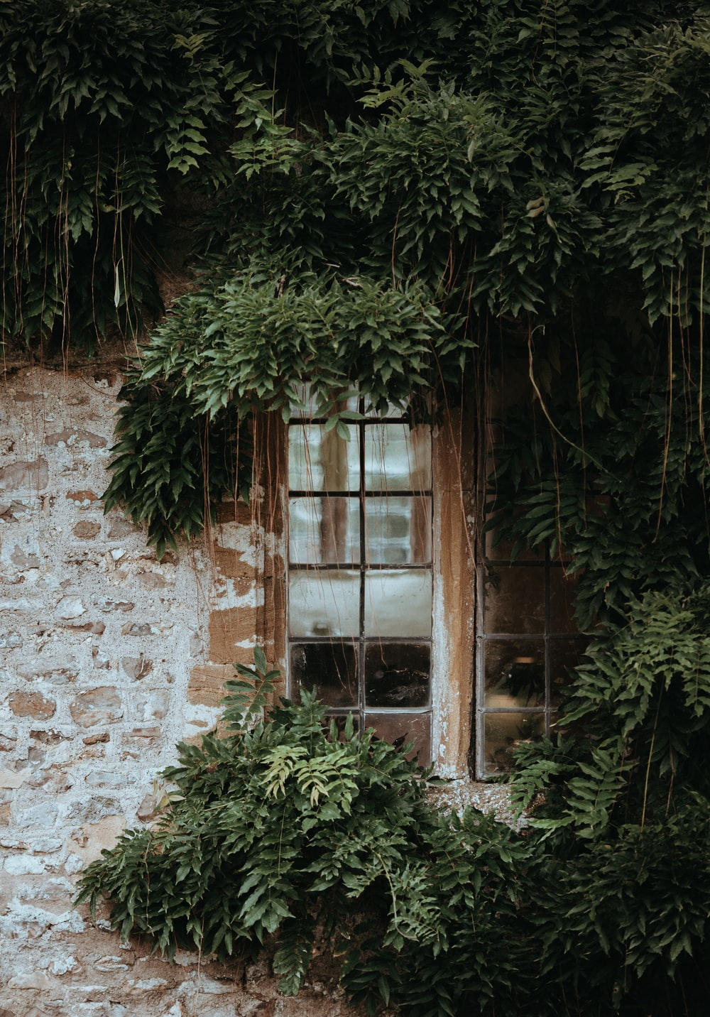 brown window covered by green leafed plant