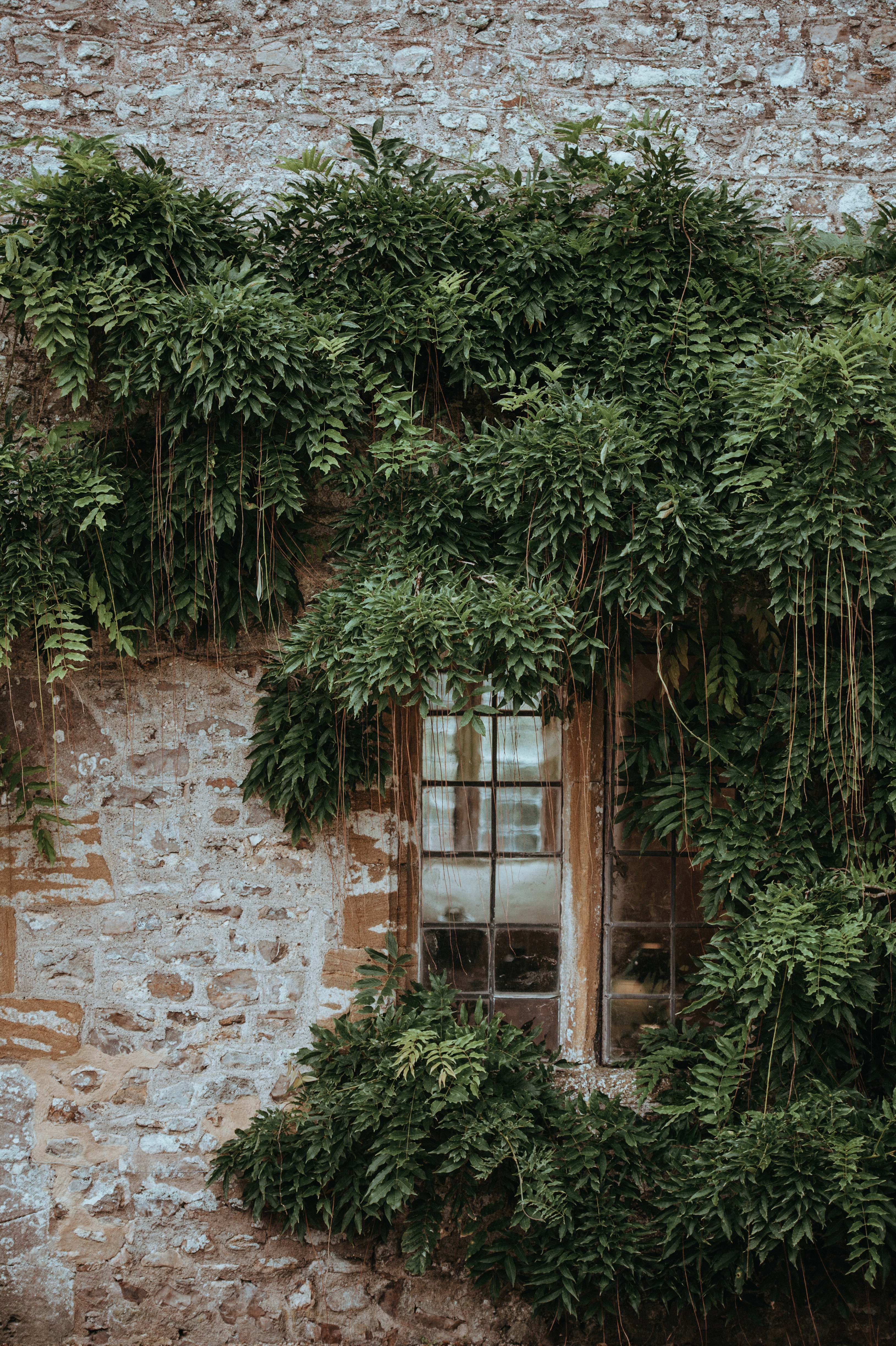 glass window surrounded by green leafed plants
