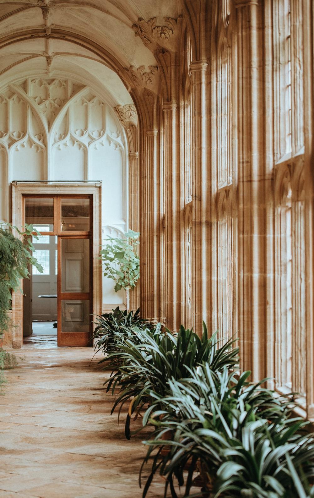 green plant near window towards open door inside the building