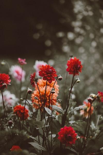 3909. Virágok