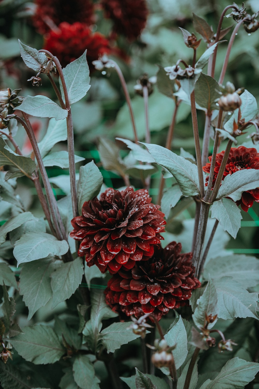 shallow focus photography of green plant with red flowers